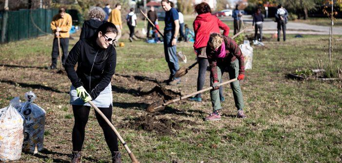 Több mint harminc fával bővült a klímaerdő